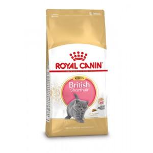 royal canin british shorthair kitten kattenvoer. Black Bedroom Furniture Sets. Home Design Ideas