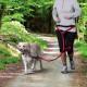 Trixie Handsfree Doggybelt voor de hond